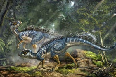 20110520083122tianyulong-bristly-dinosaur