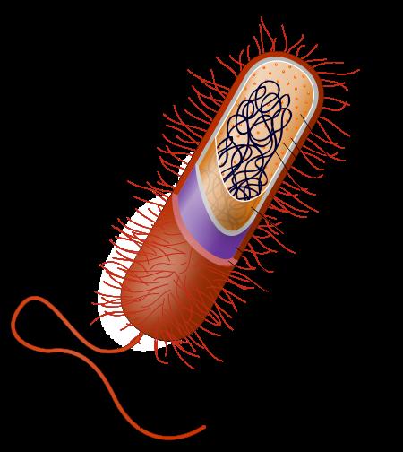Prokaryote_cell