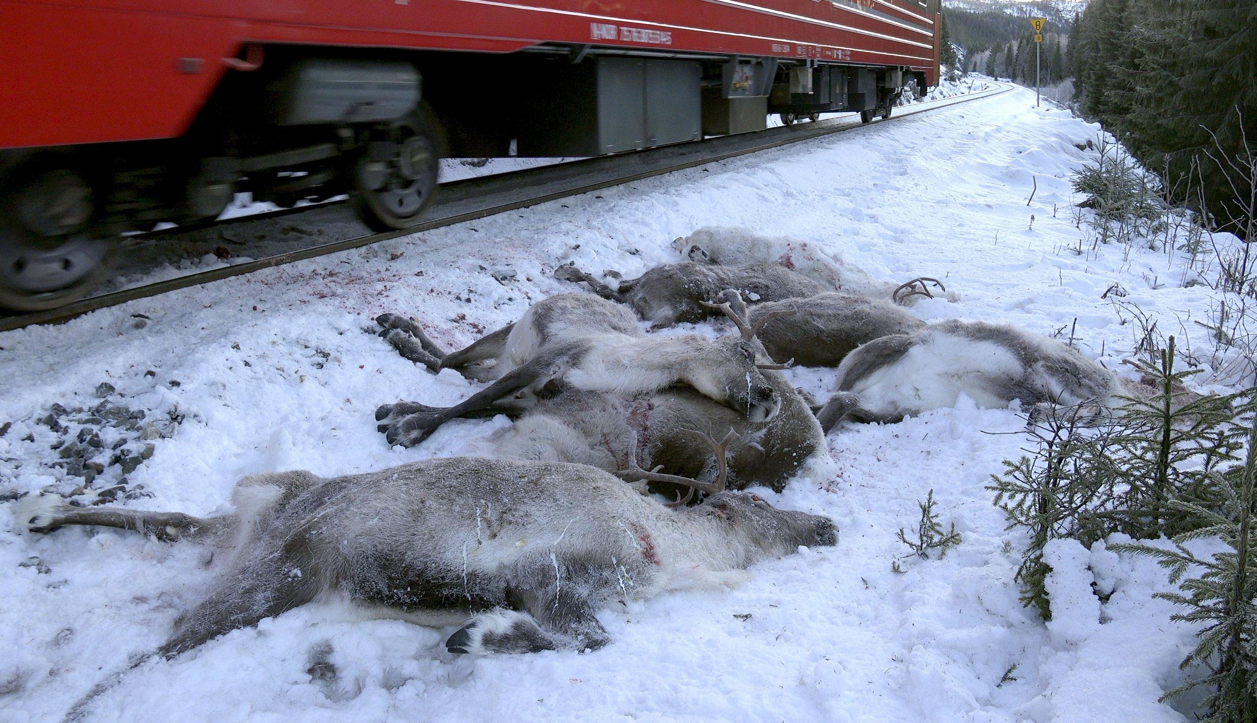 Dead_Reindeer