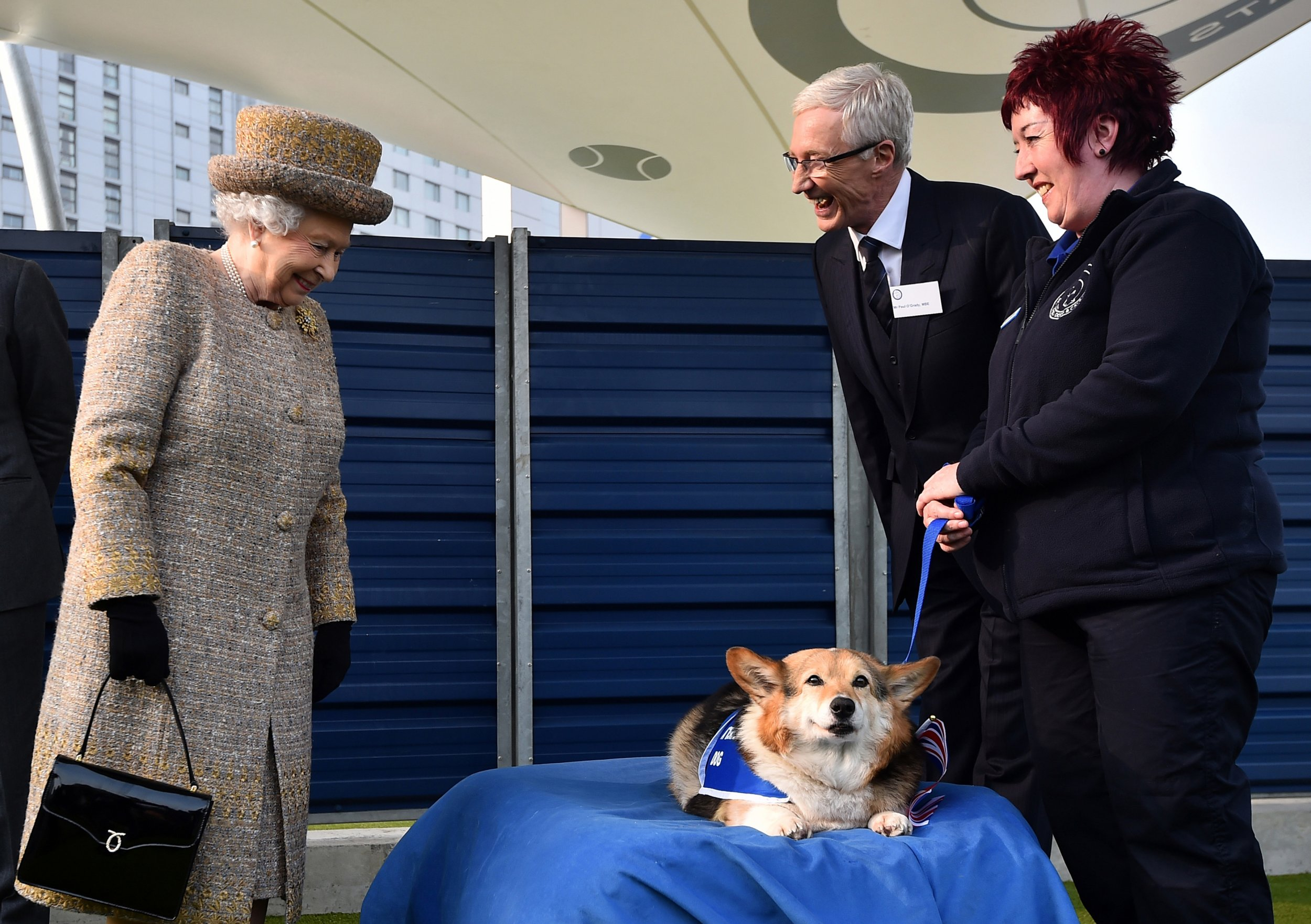 Windsor Battersea Dogs And Cats Home