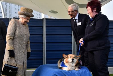 11_27_Queen_Corgis_Dogs