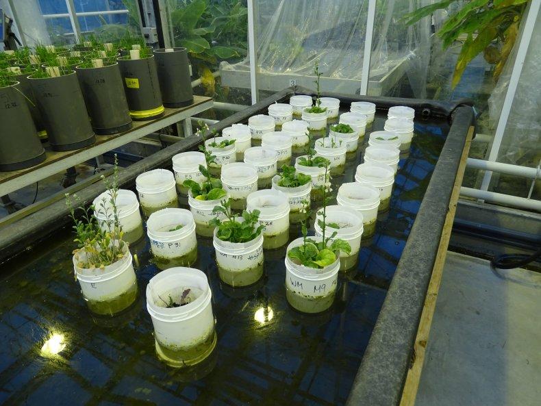 11_28_Aragula Plant Mars_01