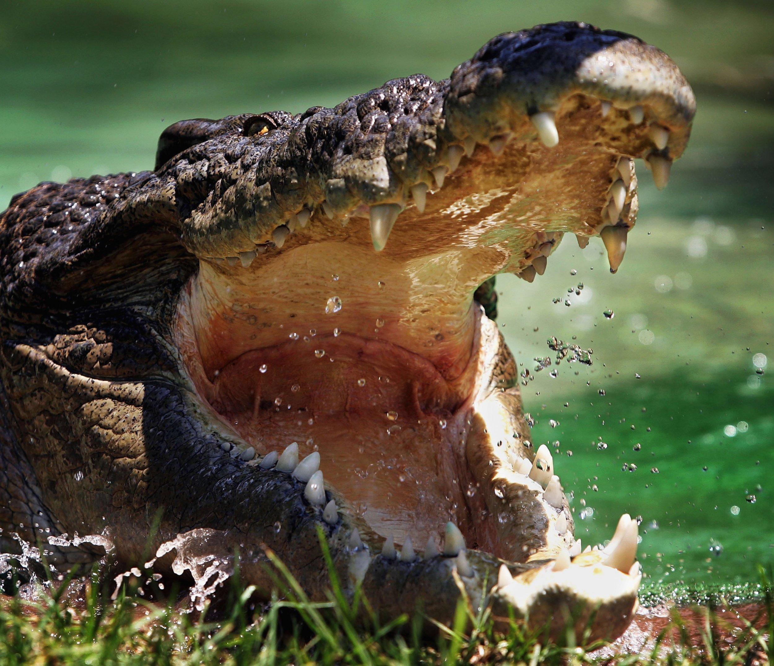 1128_Crocodile_Attack