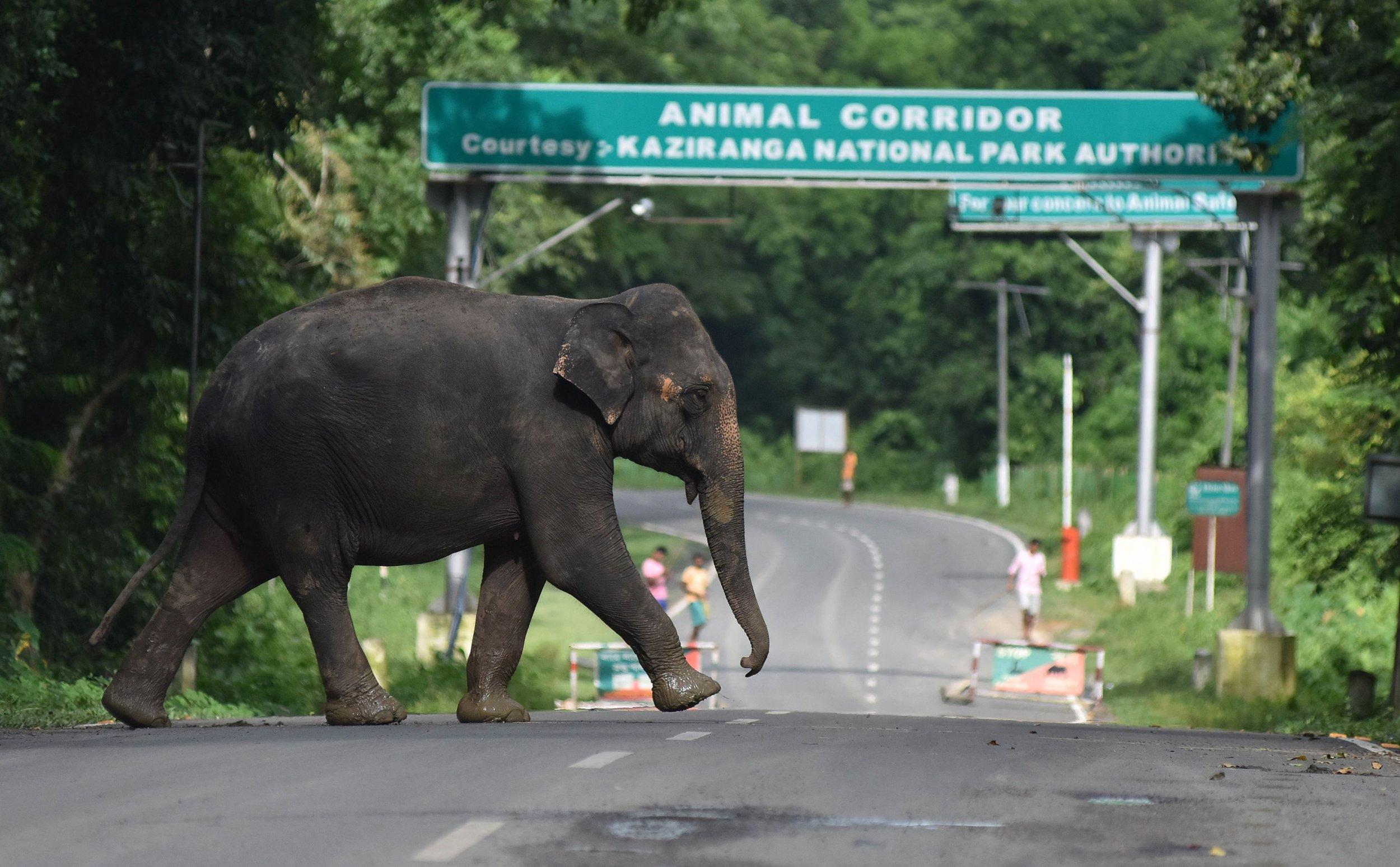 11_18_elephant