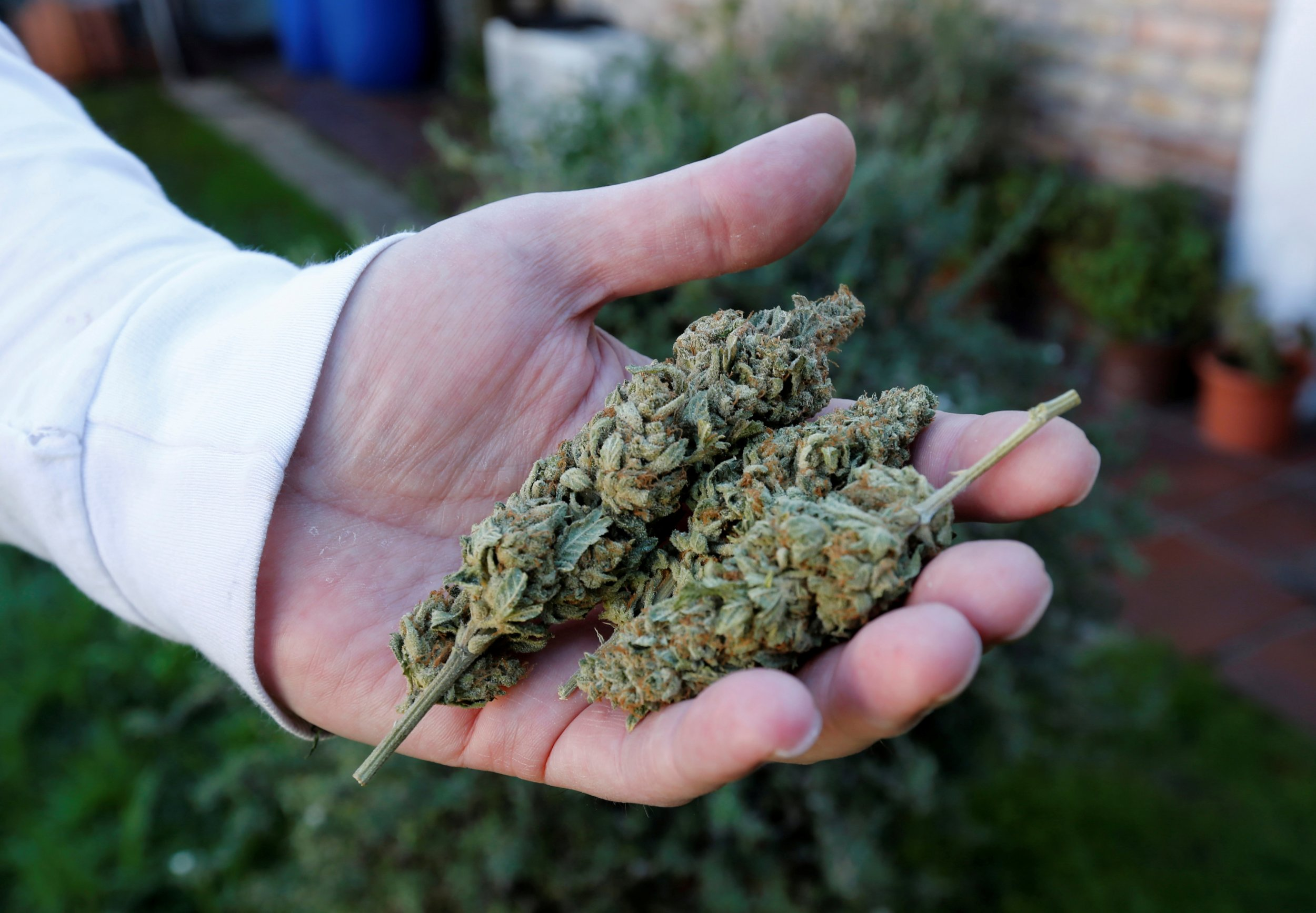 11_28_marijuana_02