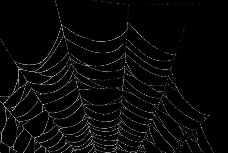 dark web sites down drug bust