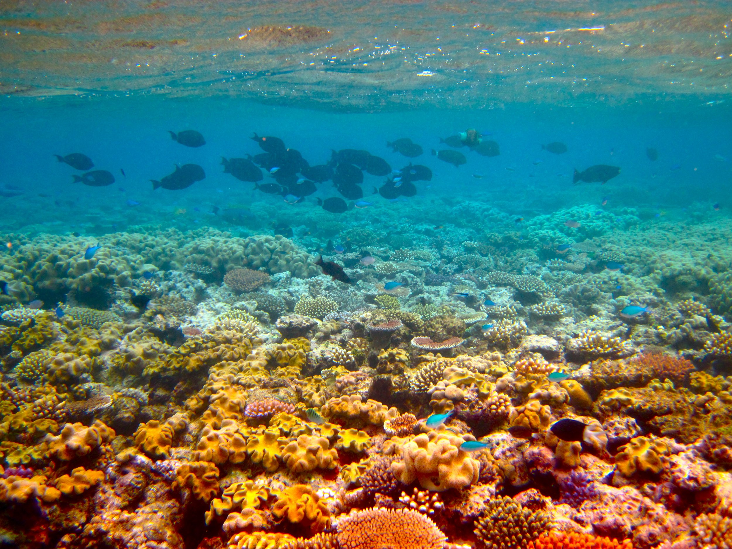 Great Barrier Reef Might Not Be Dying After All 112