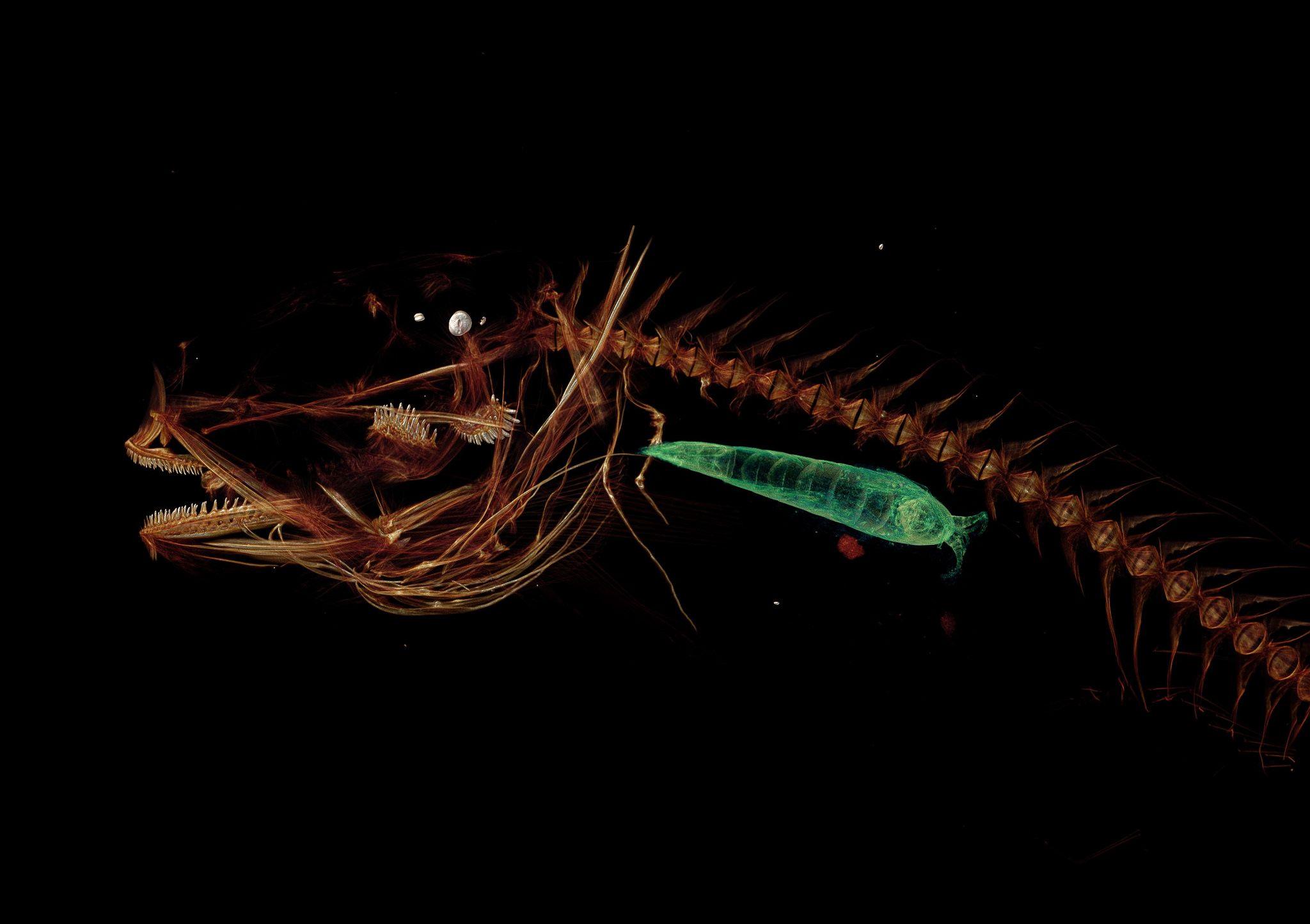 11_29_Deepest Fish_01