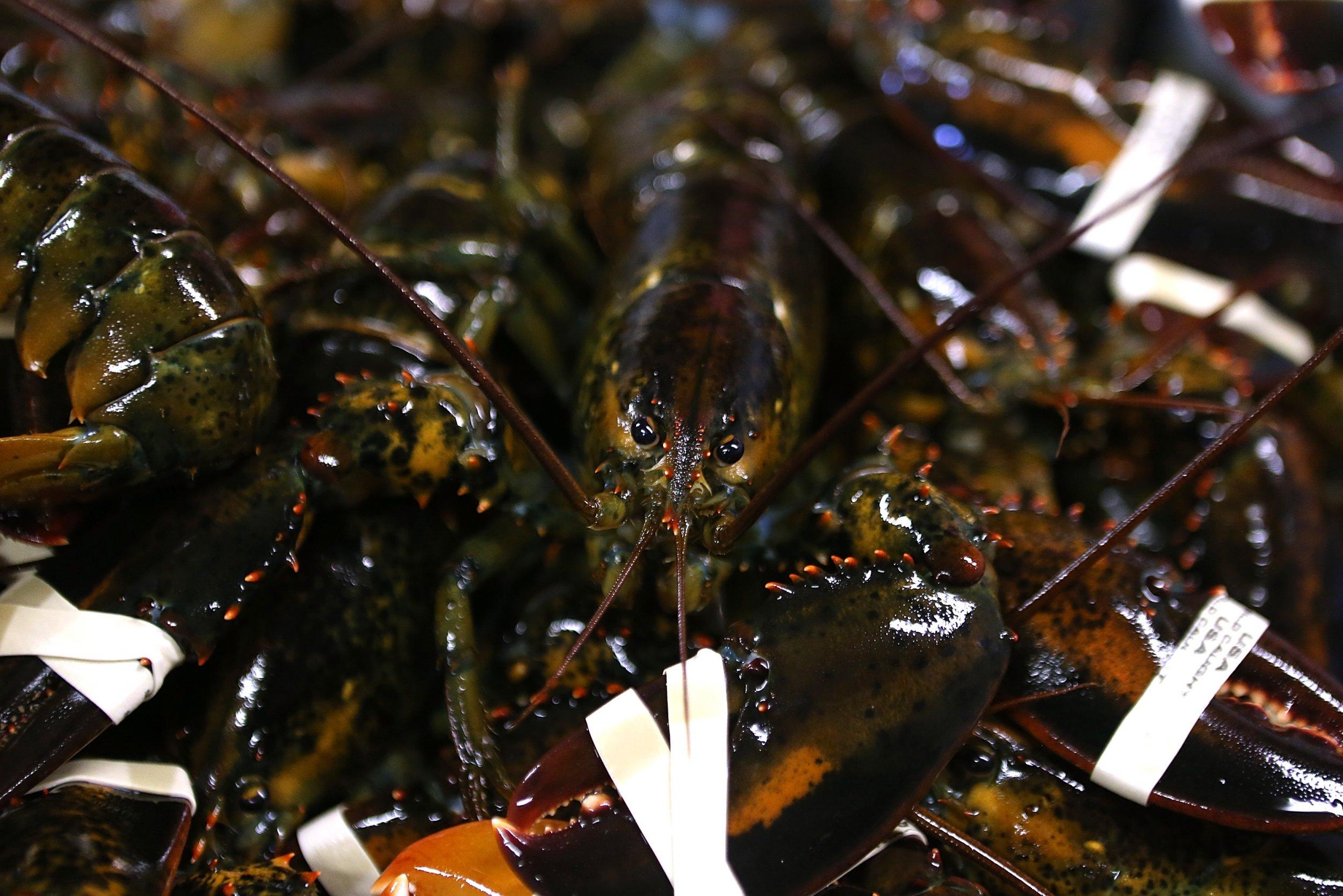 11_30_Lobster