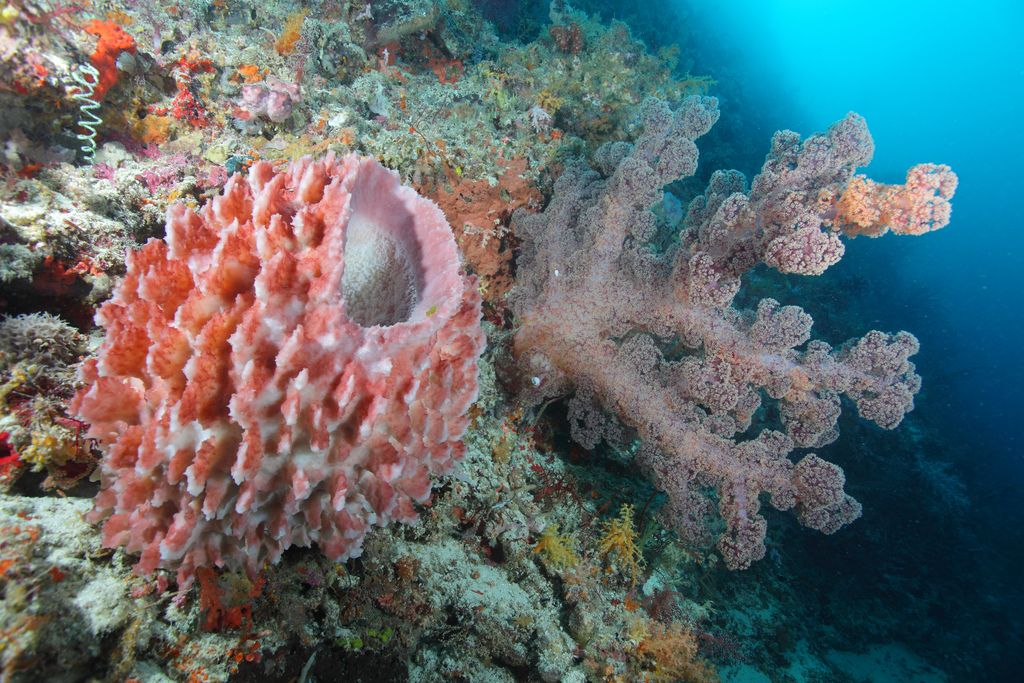 BarrelSponge_and_soft_coral