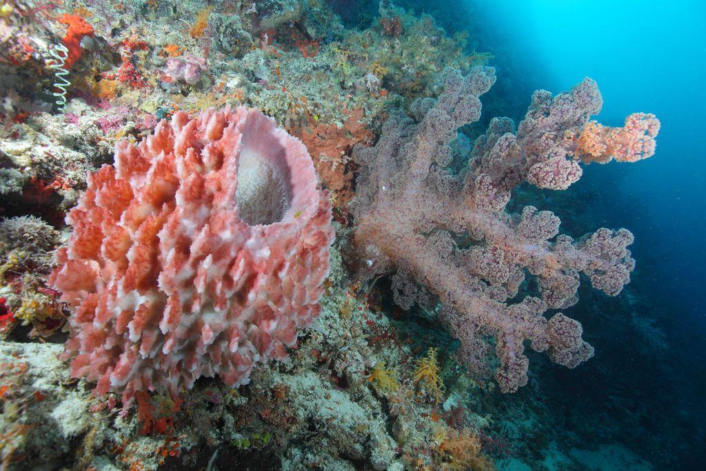 BarrelSponge_and_soft_coral