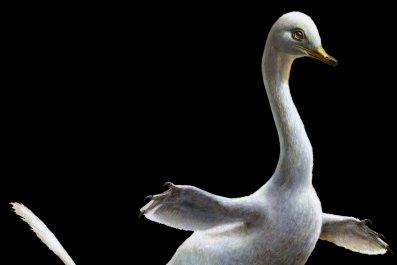 12_06_halszkaraptor_duck_dinosaur_thumb