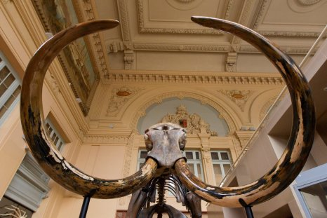 12_08_mammoth
