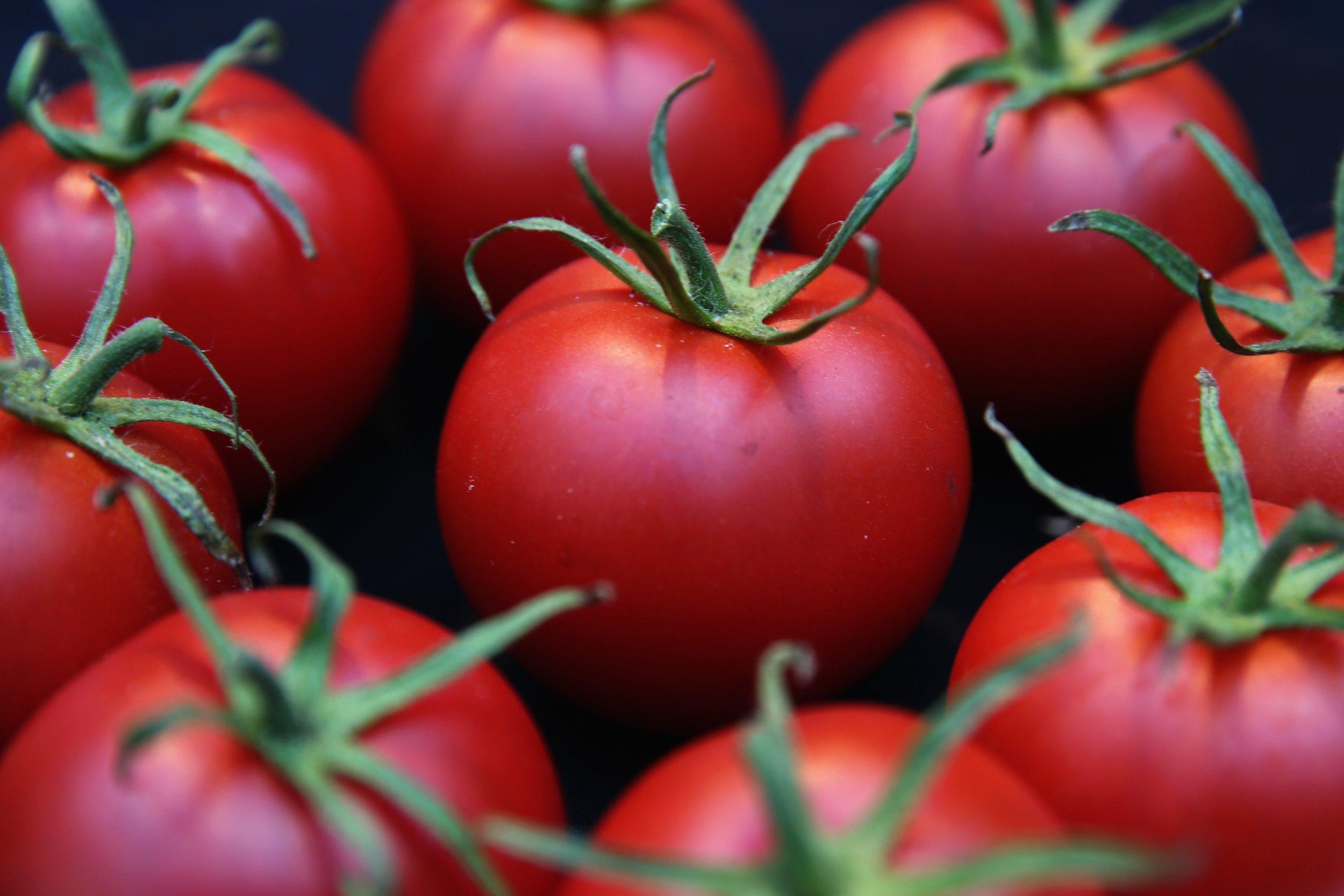 12_09_Tomatoes