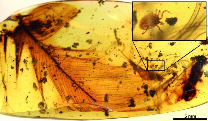 Dinosaur_feather_and_tick_in_amber