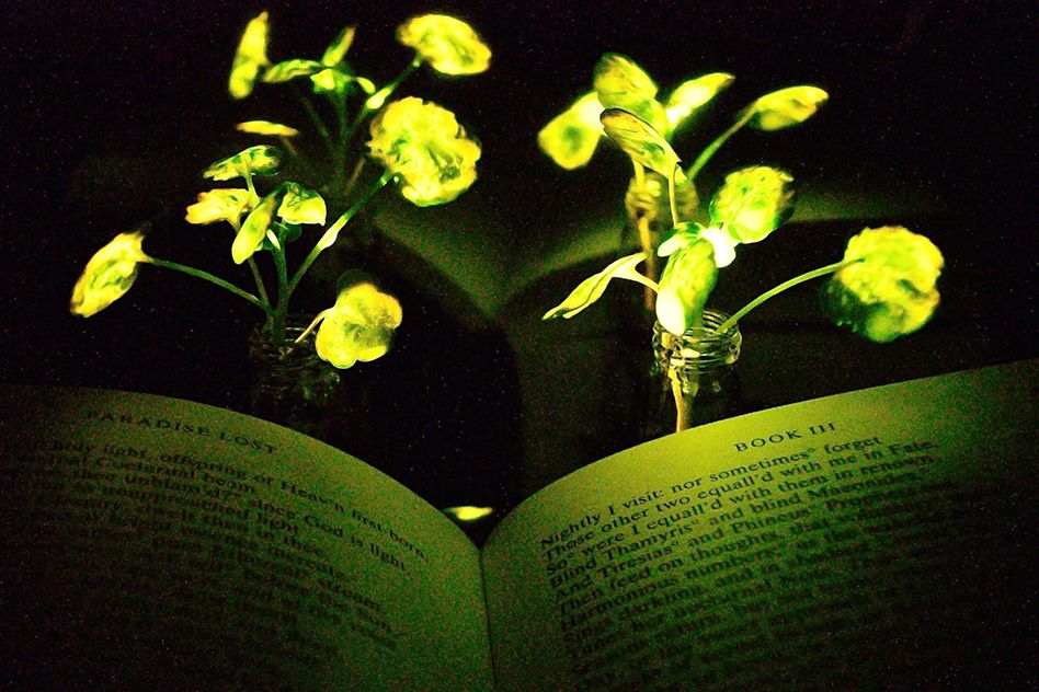 MIT-Glowing-Plants