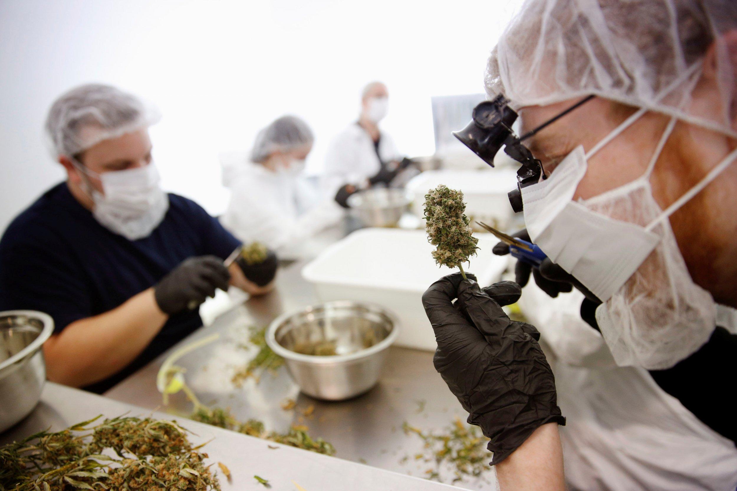 12_14_Cannabis