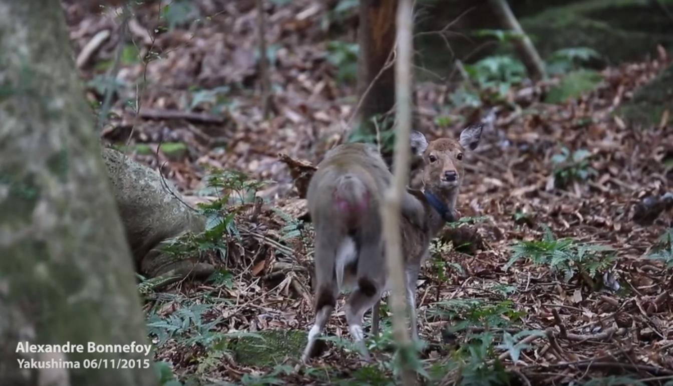 Free monkey sex wild