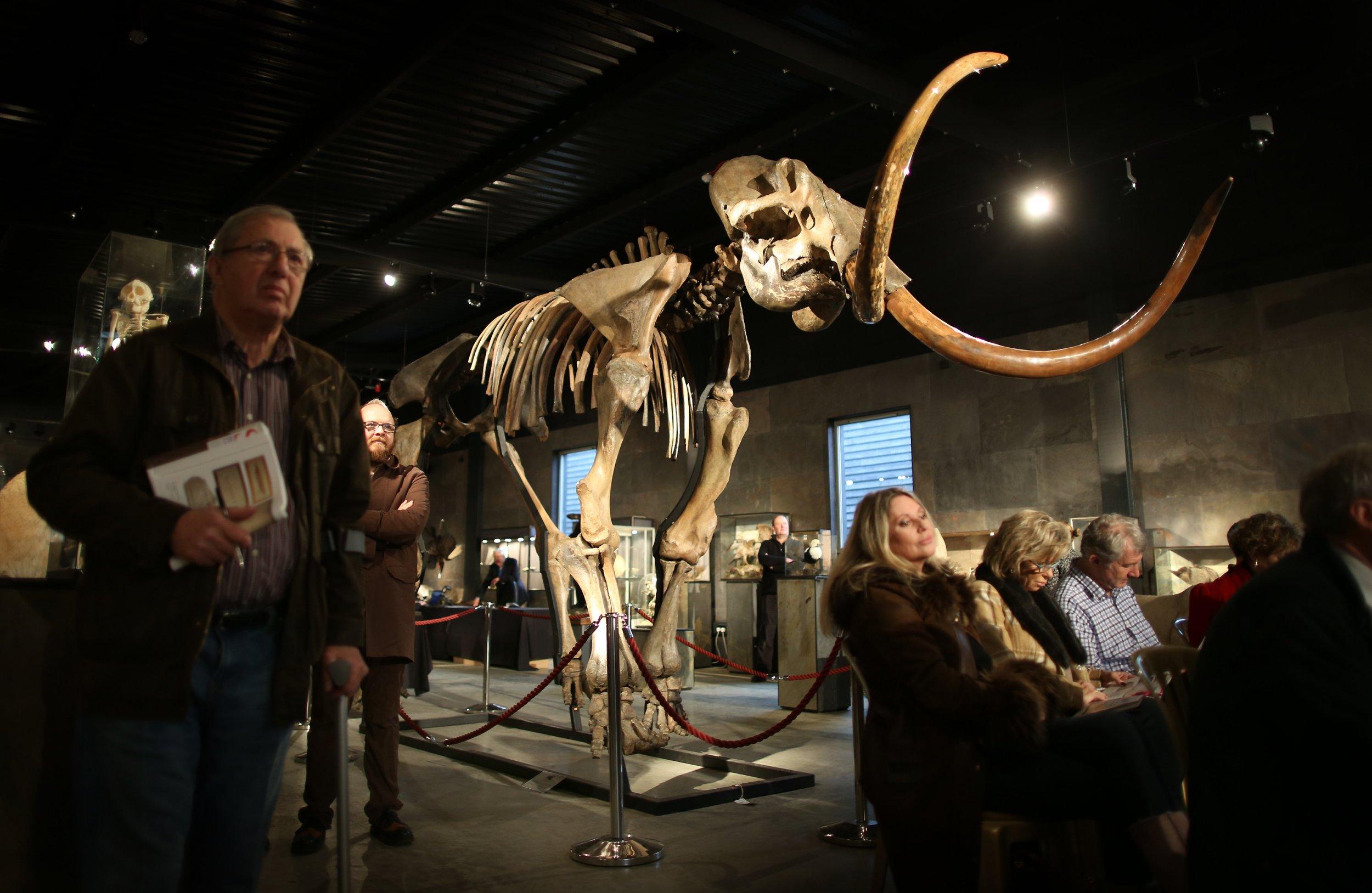 12_17_Woolly Mammoth