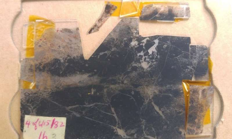 oldestfossil