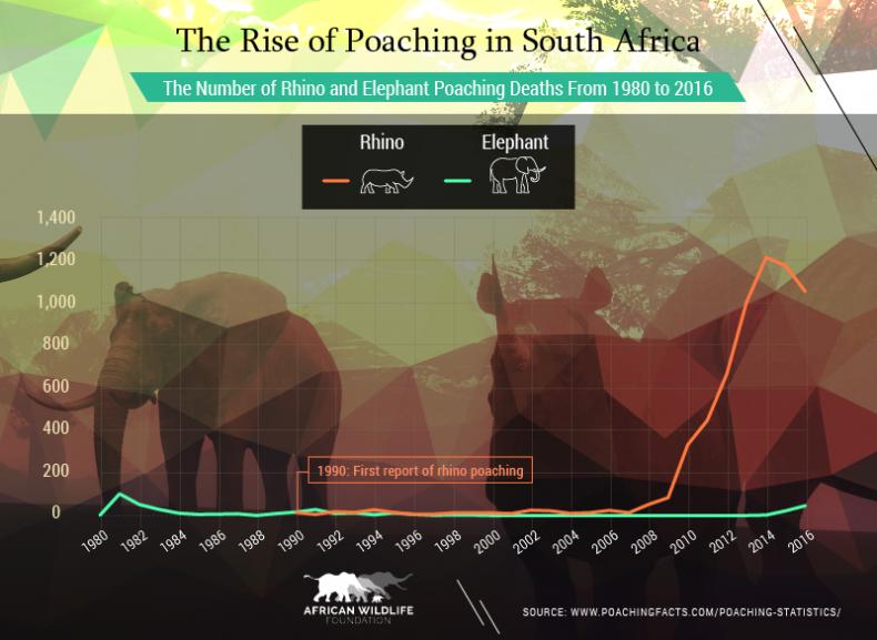 rhino_poaching_graph