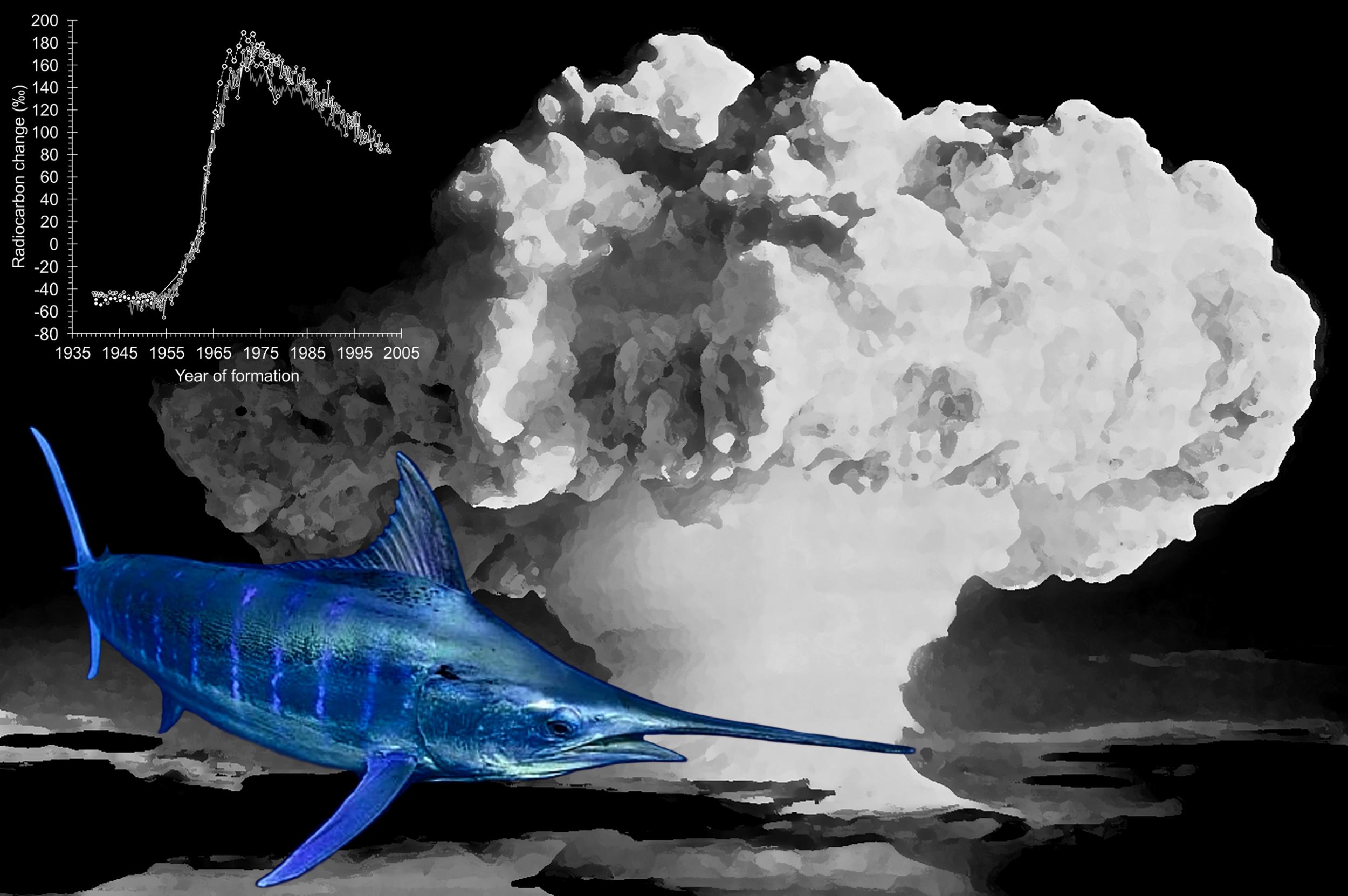 Marlin_Bomb