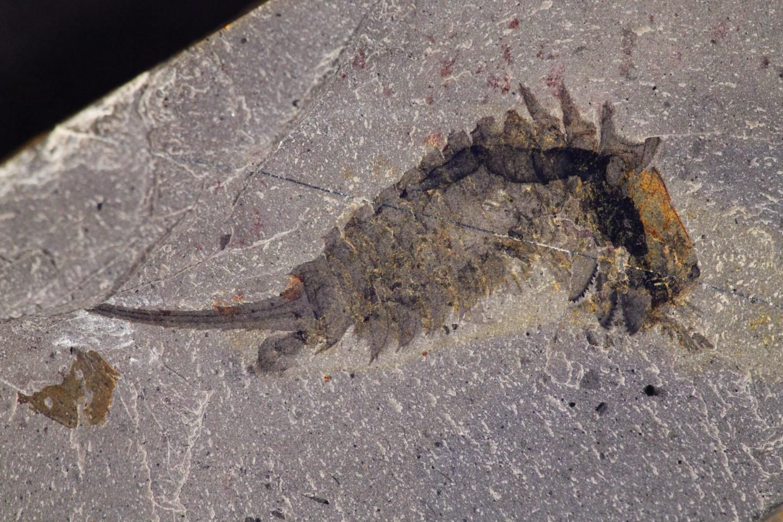 12_21_Fossil Specimen