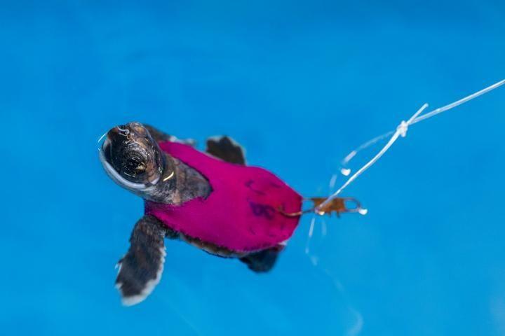 12_23_FAU Sea Turtle