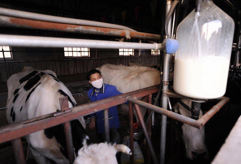 milk mongolia calcium