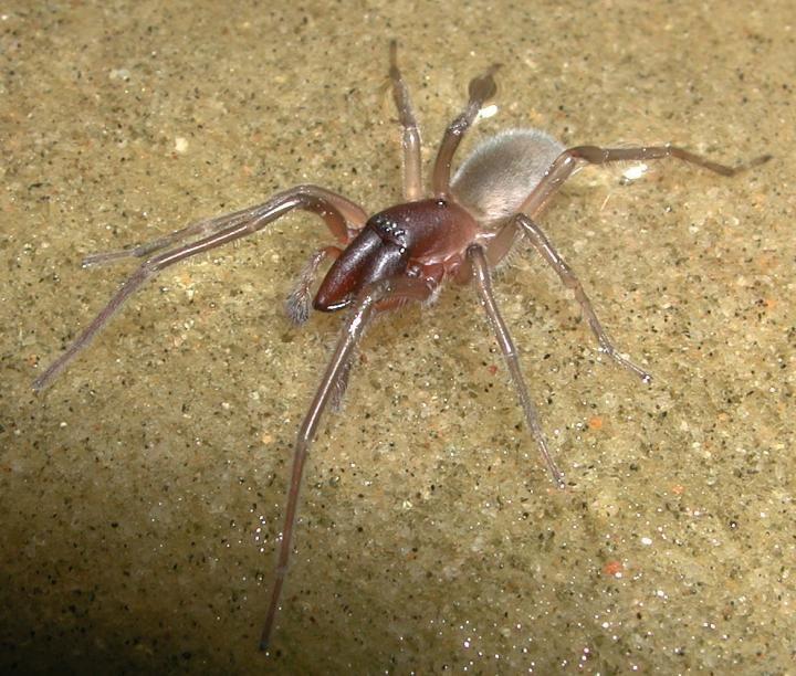 12_28_Bob Marley spider (2)
