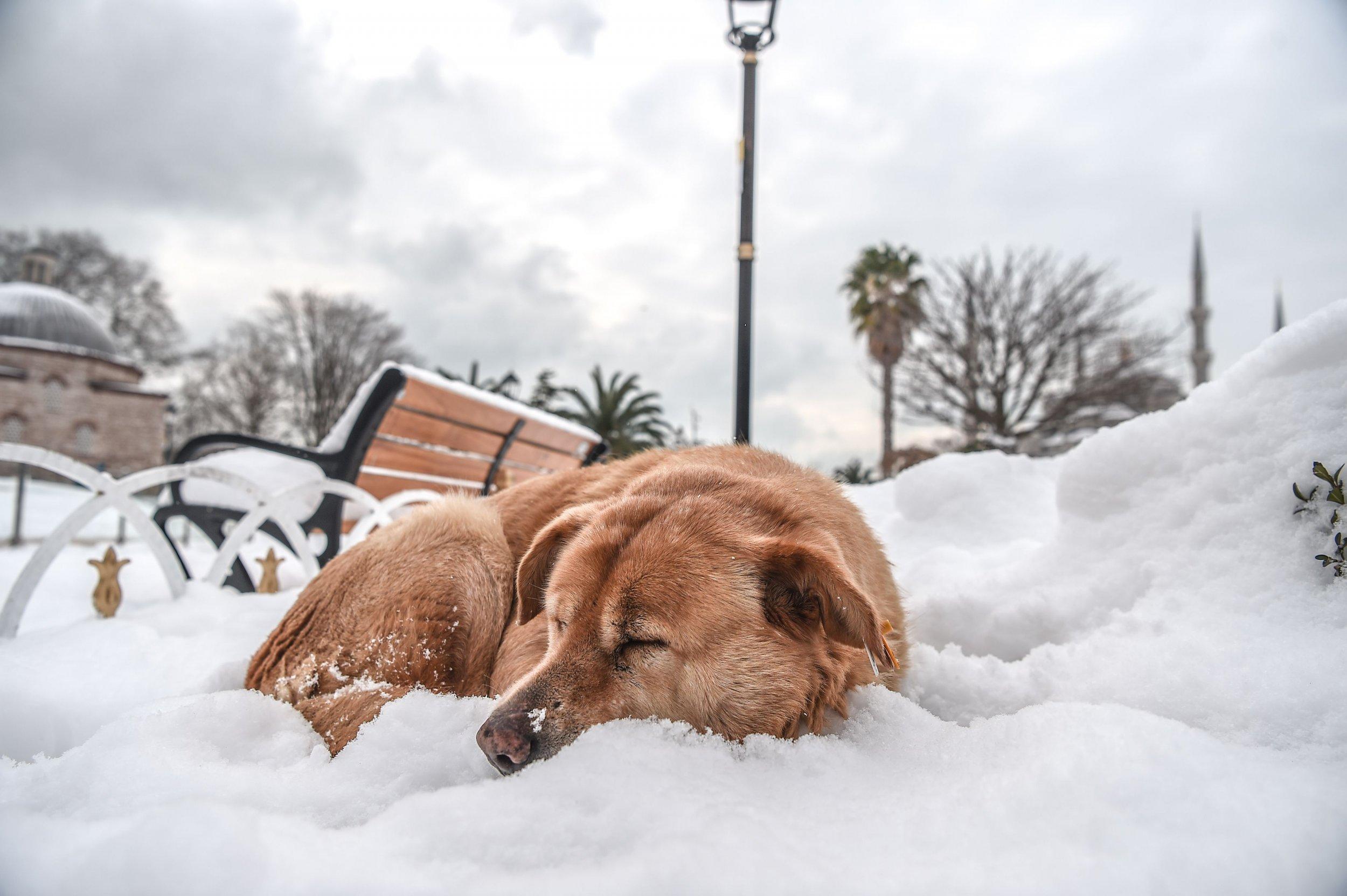12_29_Sleeping Dog