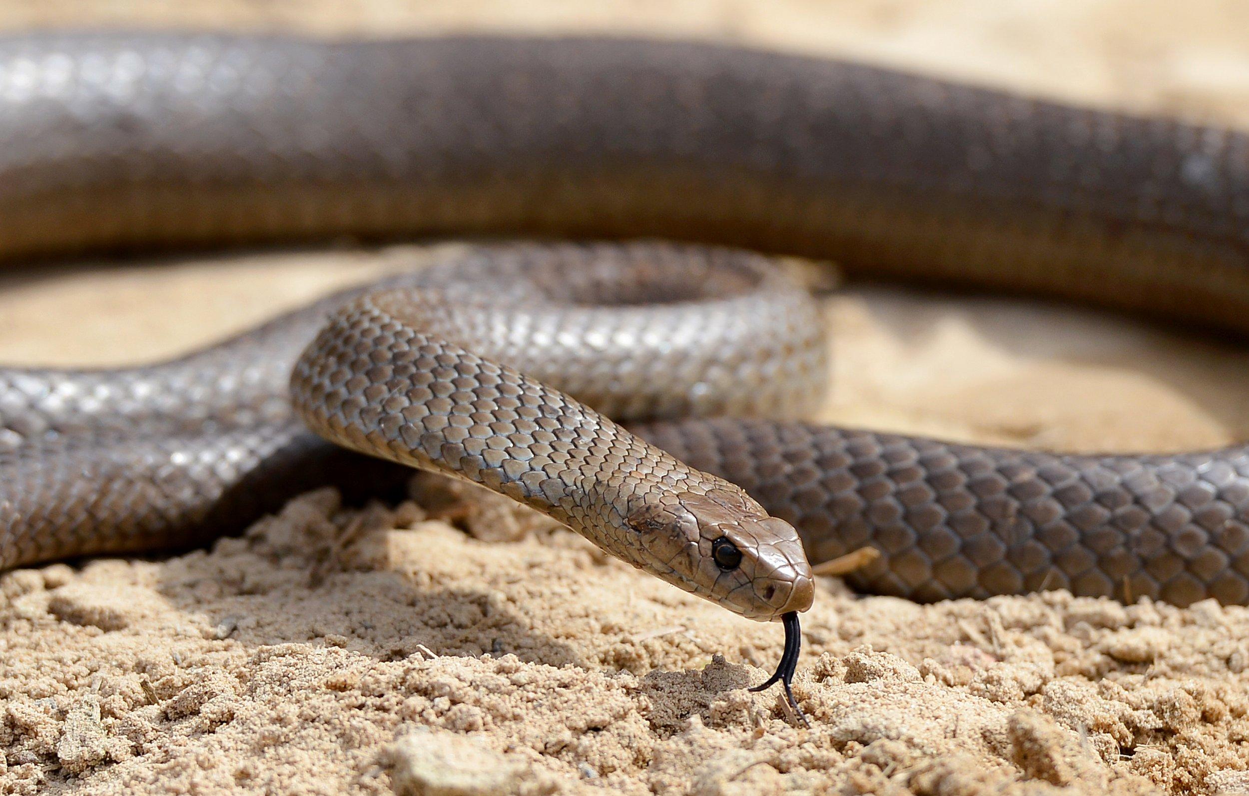 01_02_snake