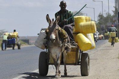Donkey_Transports_Water