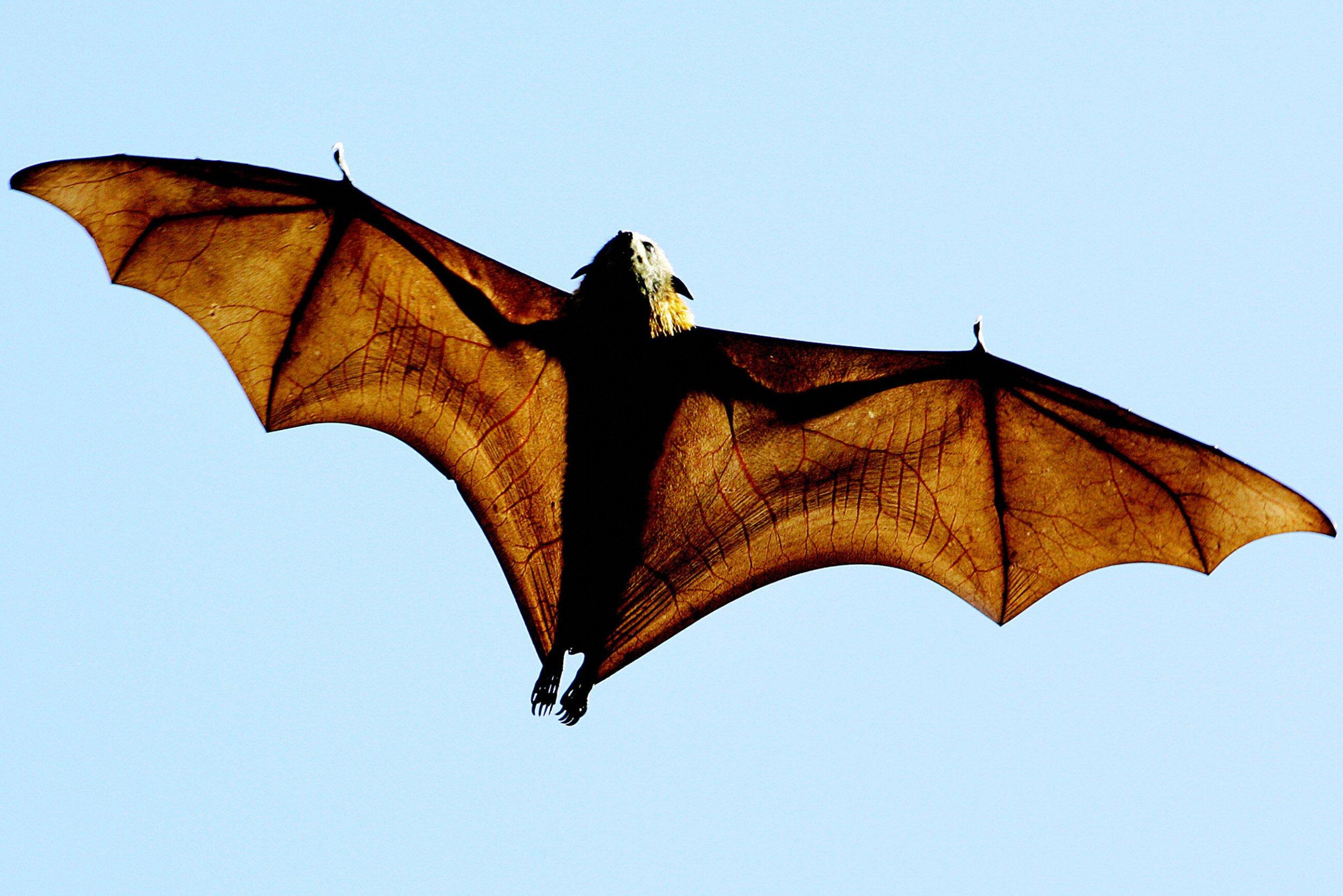 01_05_bat_drones