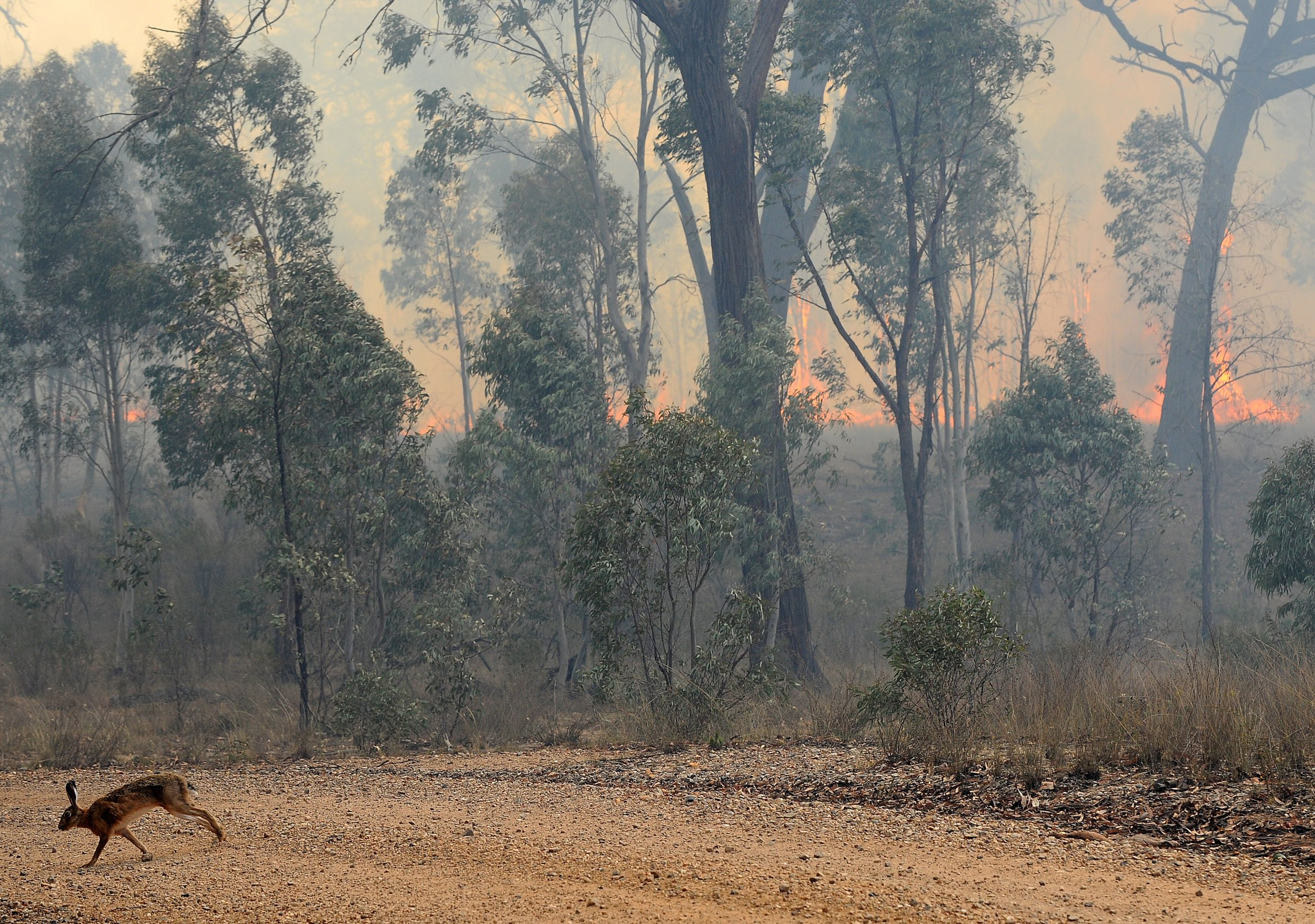 01_08_wildfire_australia_ecology