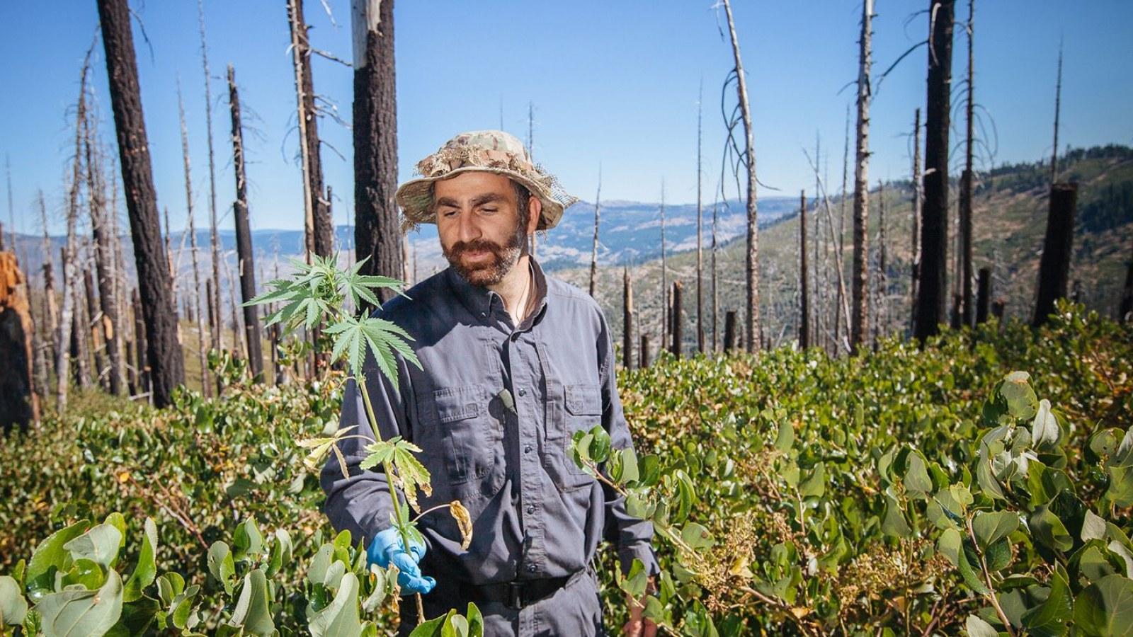 Mexican Drug Cartels May Use Legal Marijuana to Increase