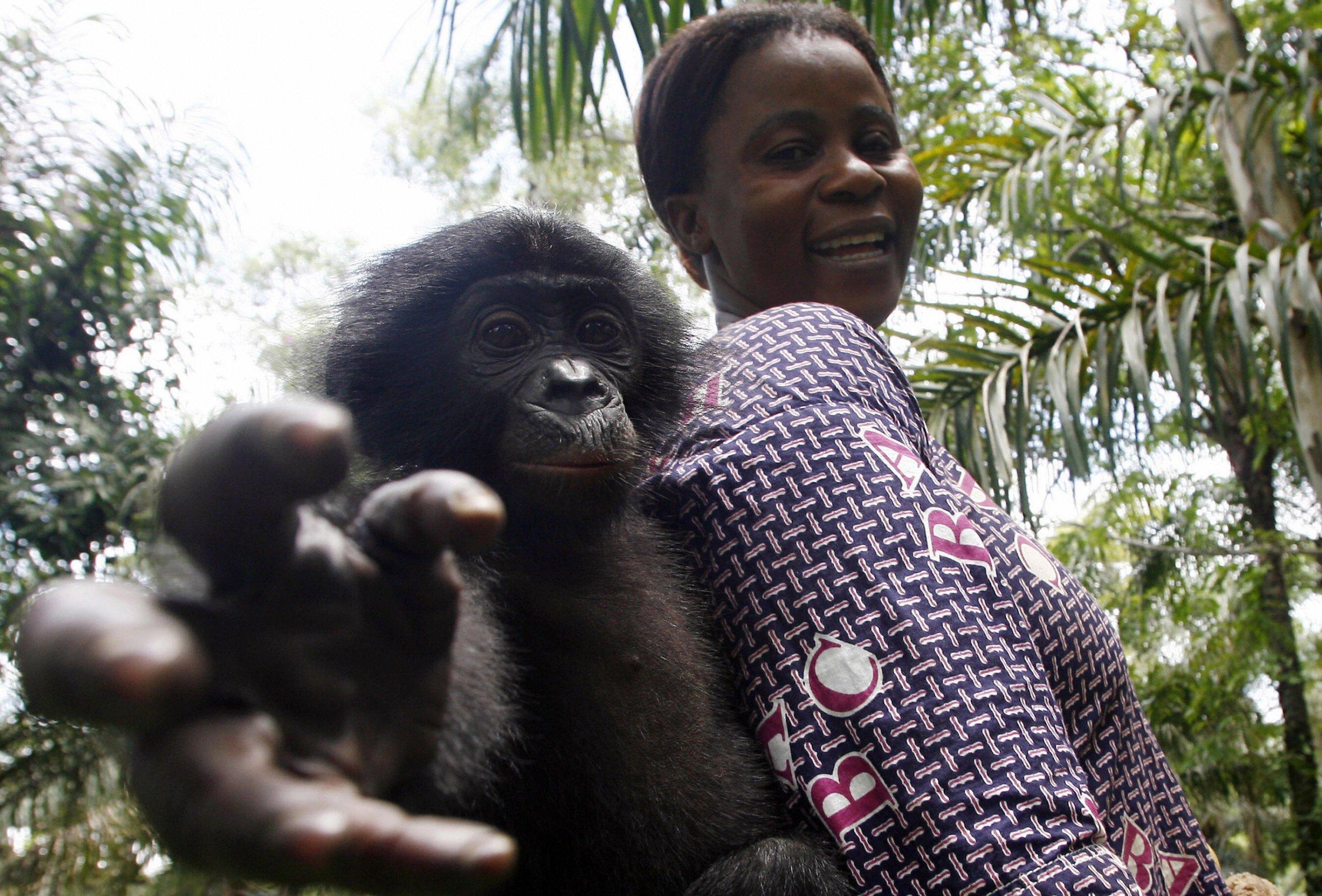 orphan bonobo