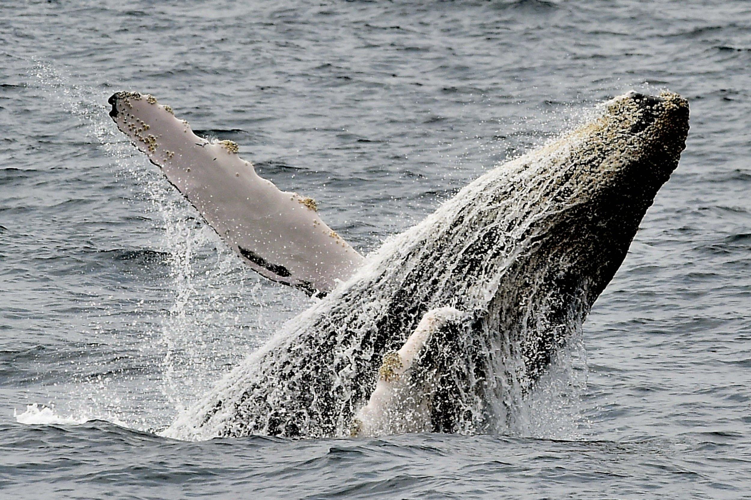 01_09_whale
