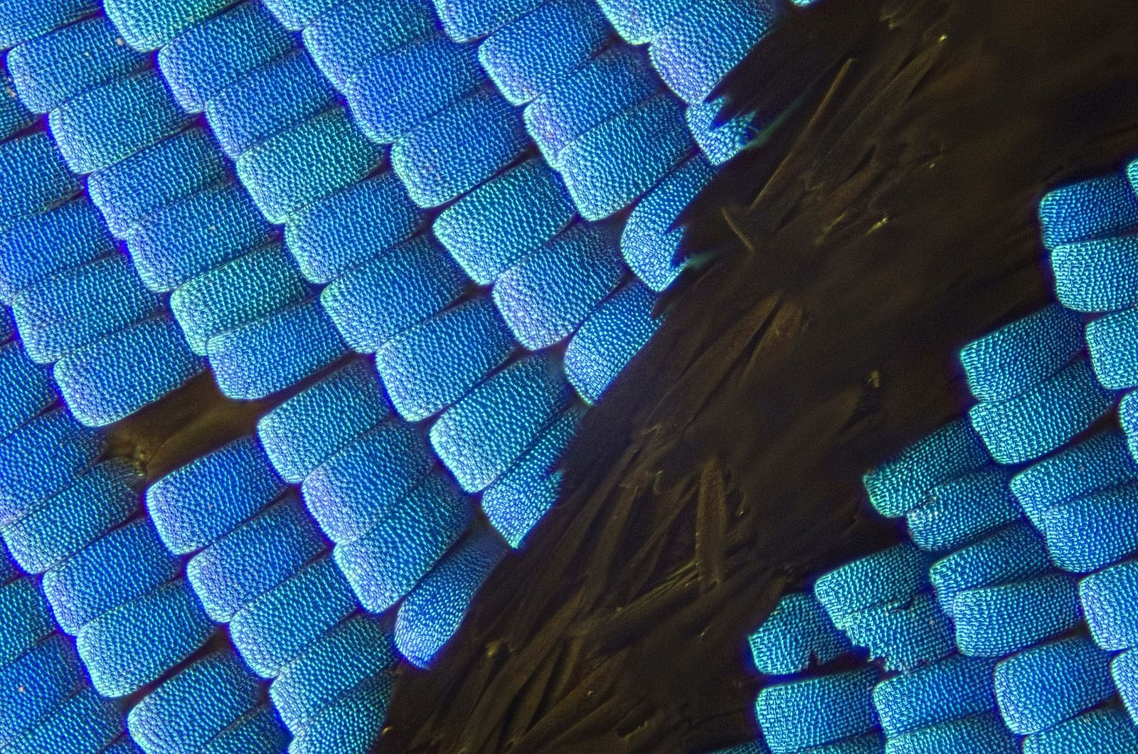 Macro_Butterfly_Wing_Scales