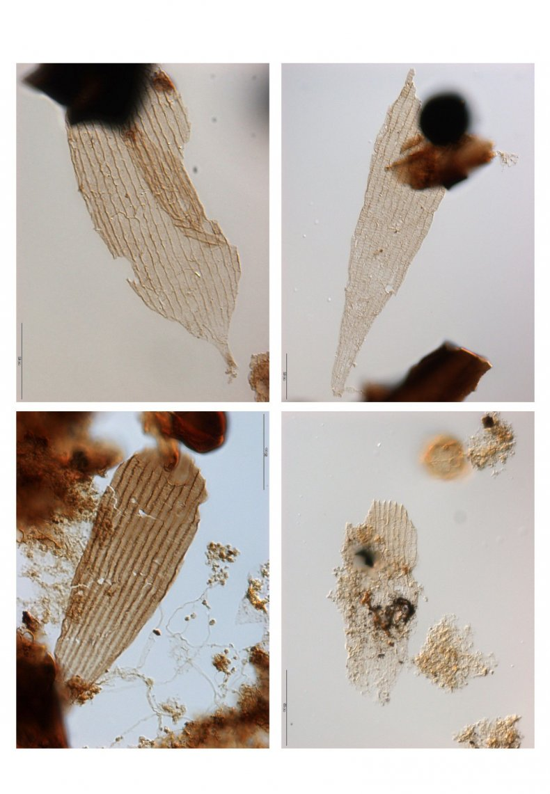 ancientwingscales_butterfly_moth