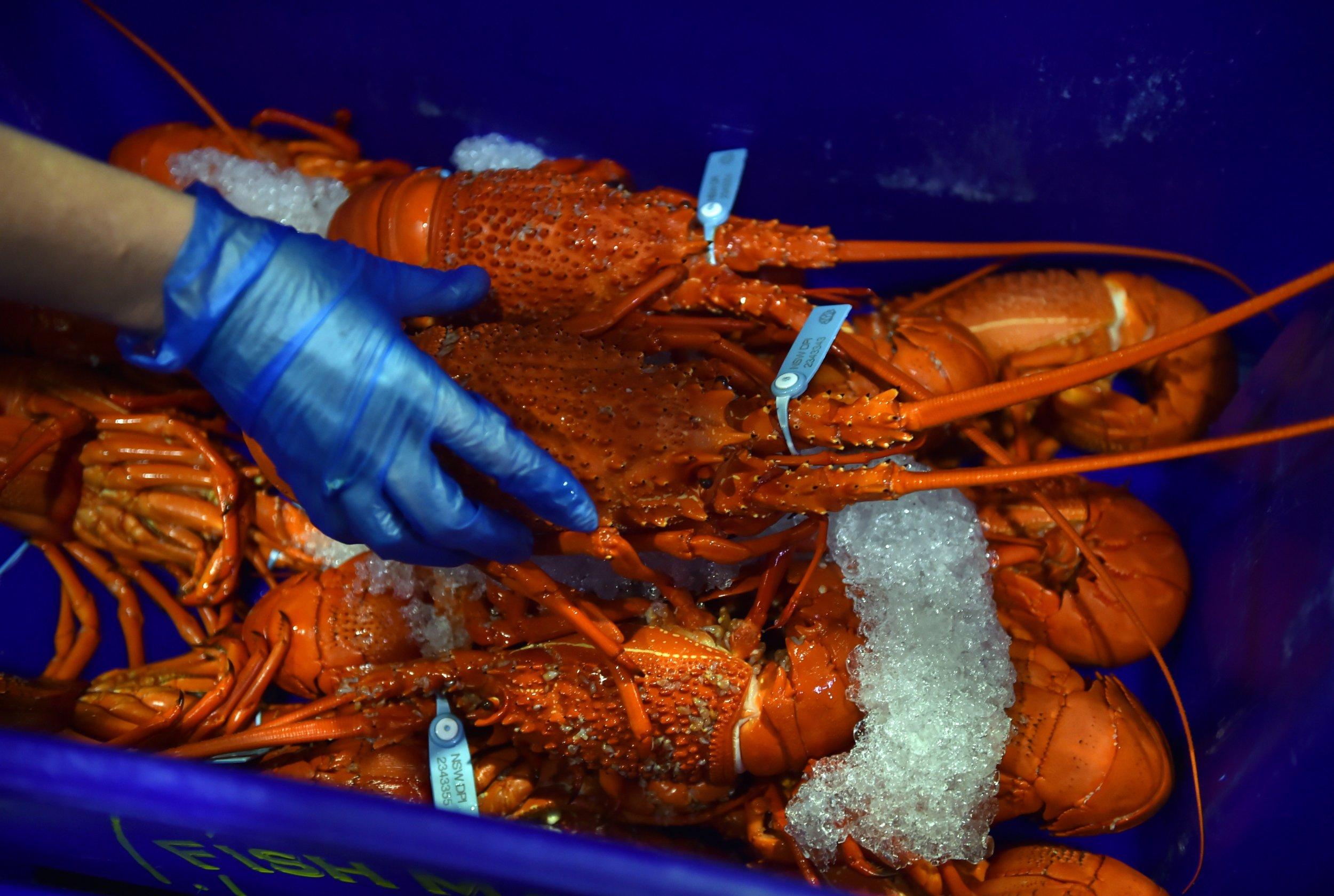 1_11_lobster