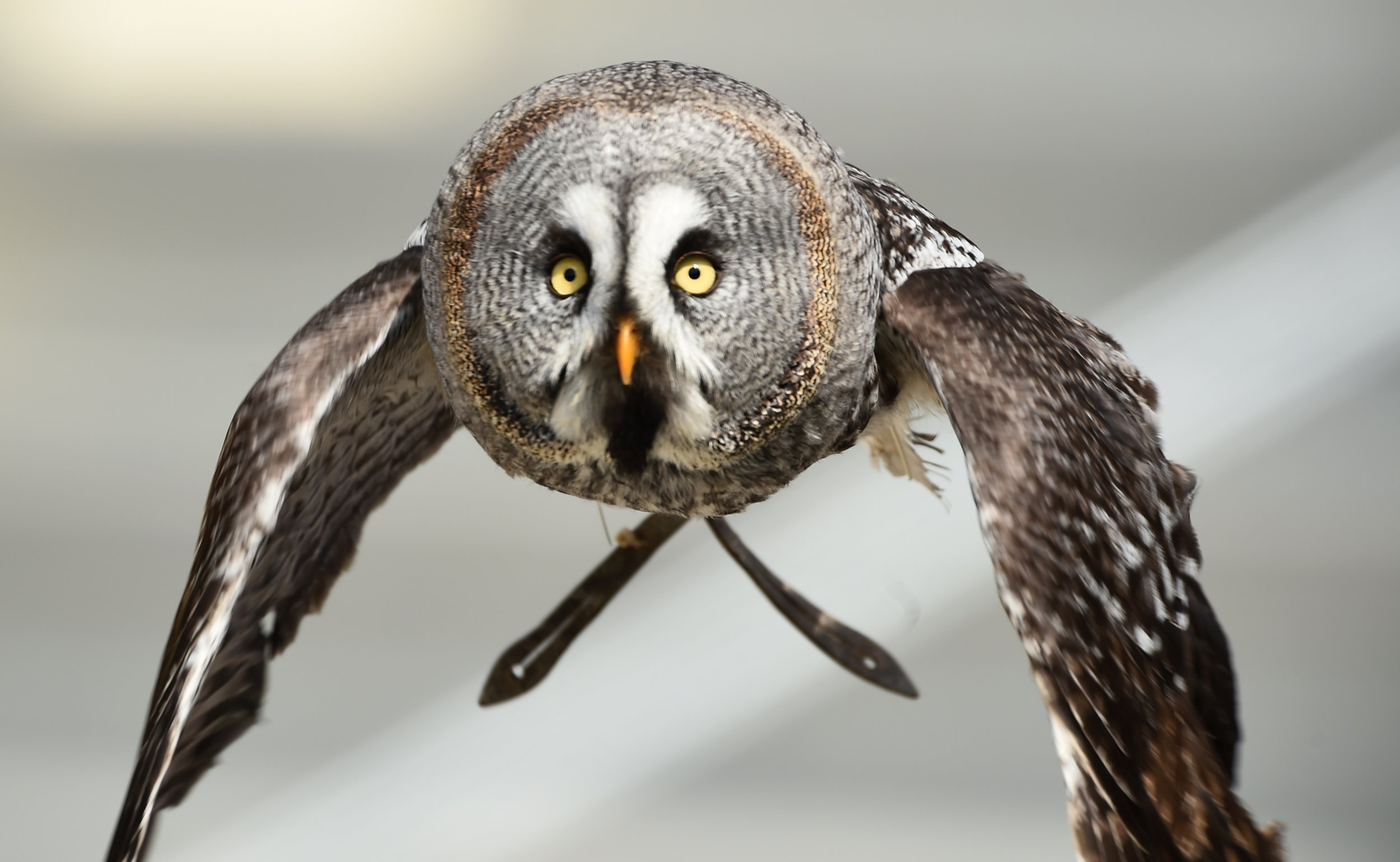 1_11_owl