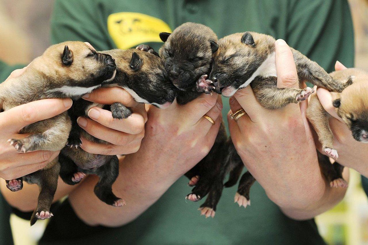 PER_Puppies_01_839193632