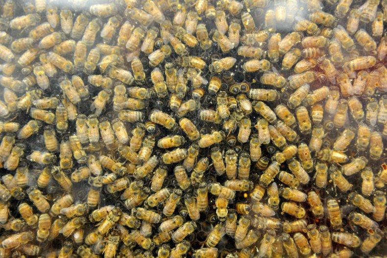 Bees_Two_Boys_Killed_Half_Million
