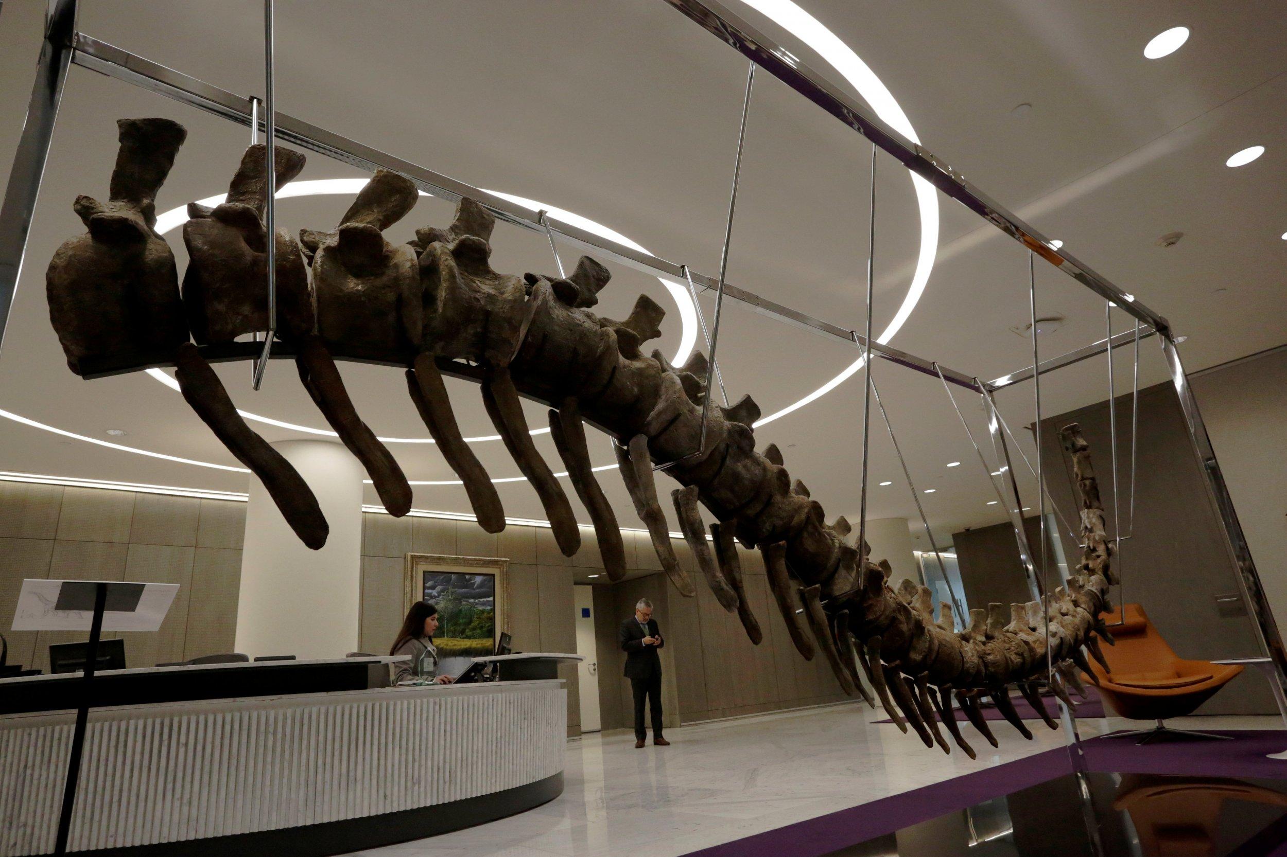 1_21_Dinosaur Tail