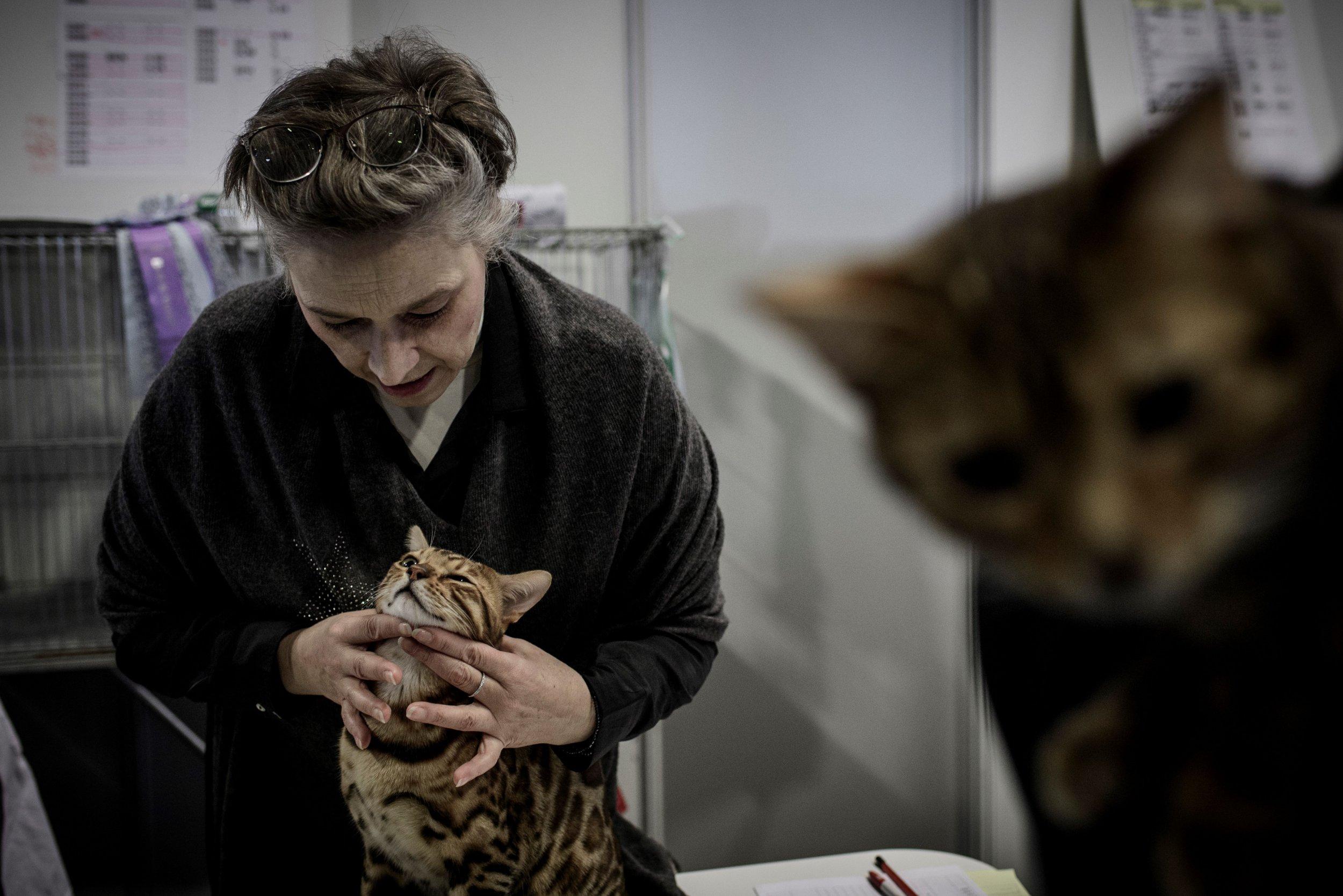 Cat at Paris Animal Show