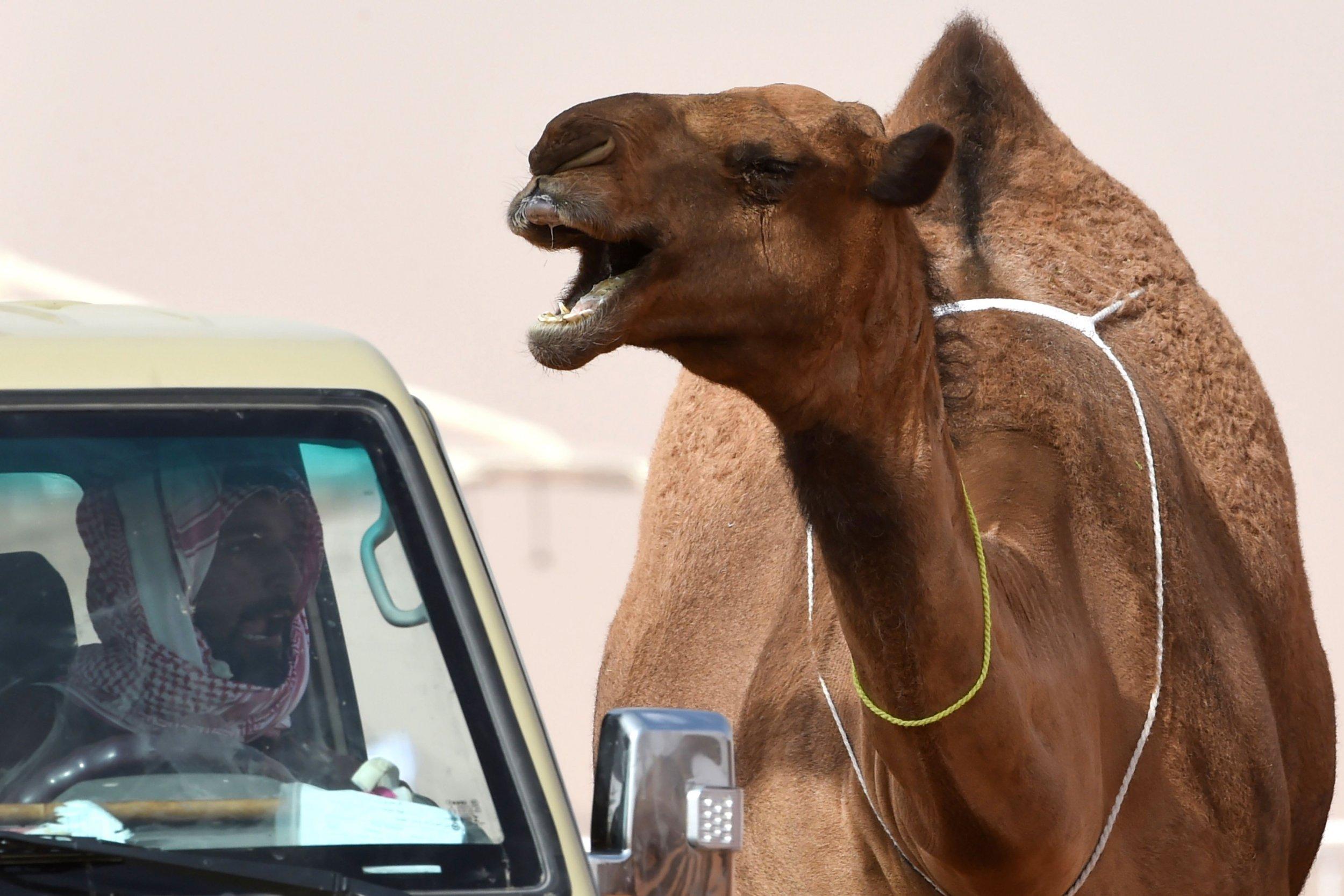 01_23_camel