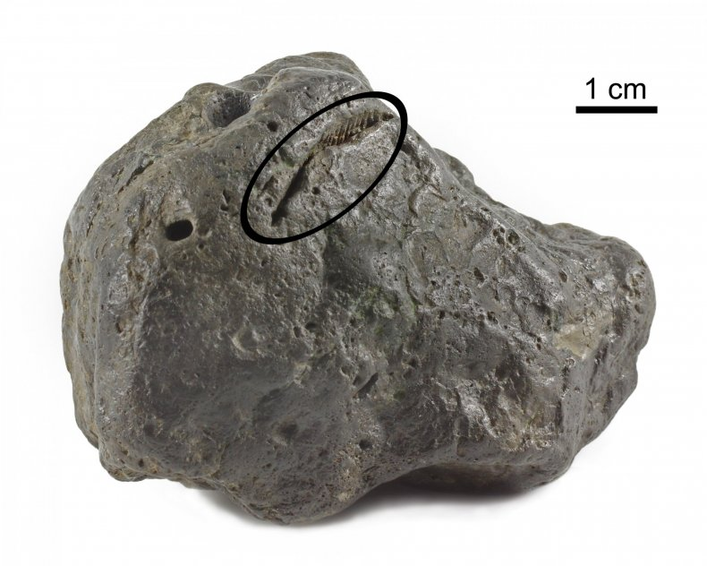 Poop_Fossil_with_Bite_Mark