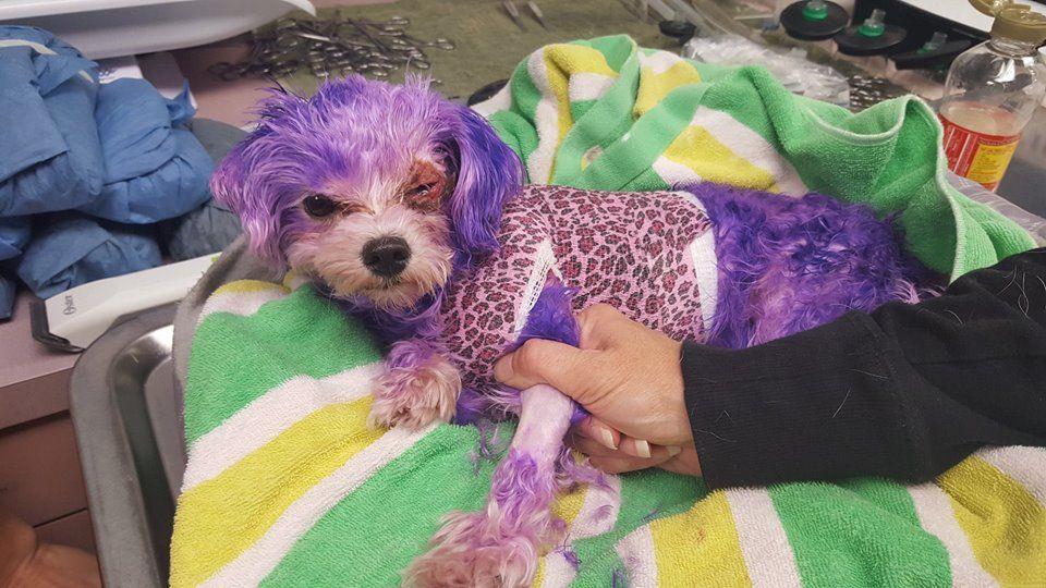 Dog_Suffers_Burns_Violet
