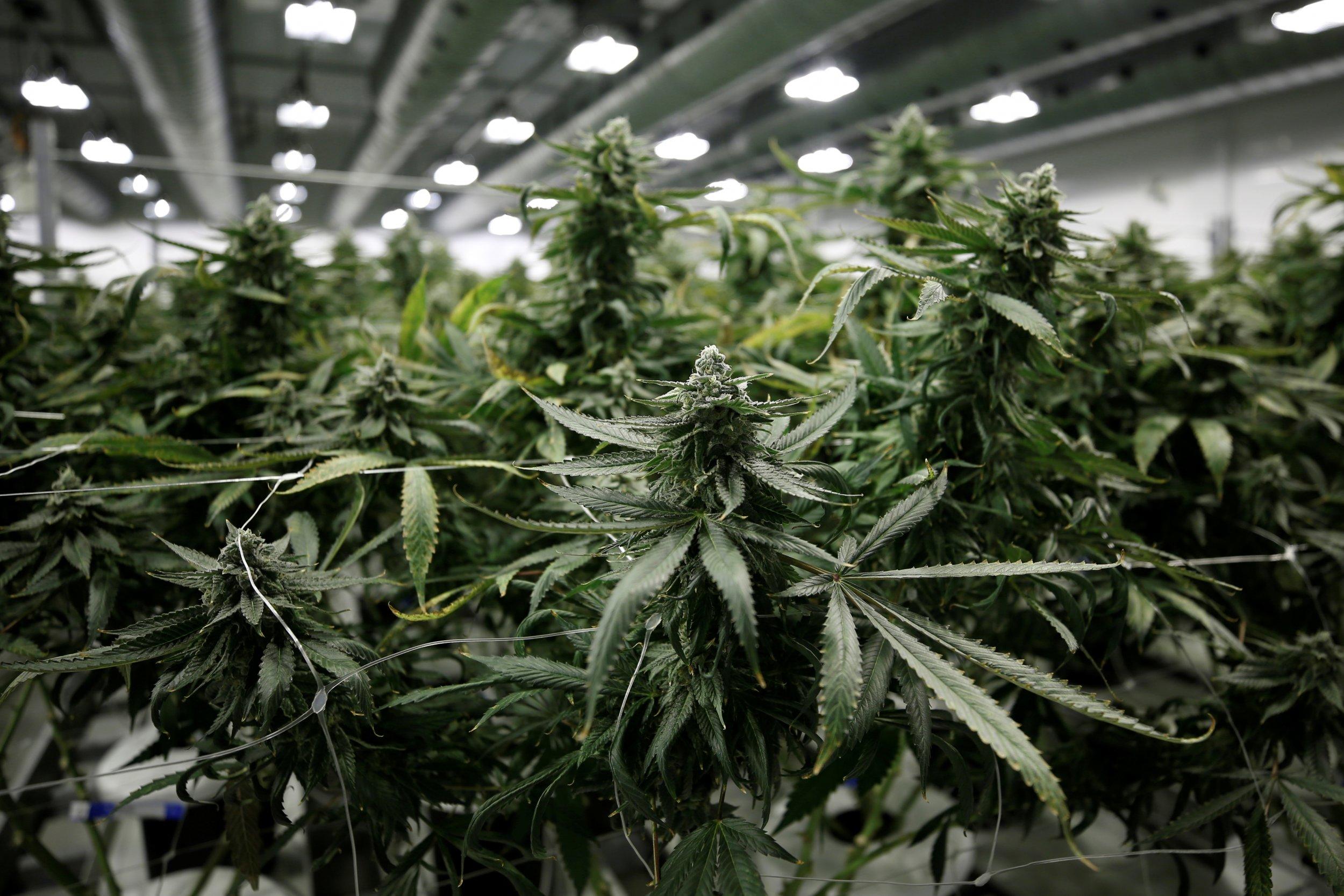 01_25_Marijuana